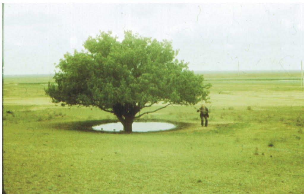 Калмыцкая саванна, Утта