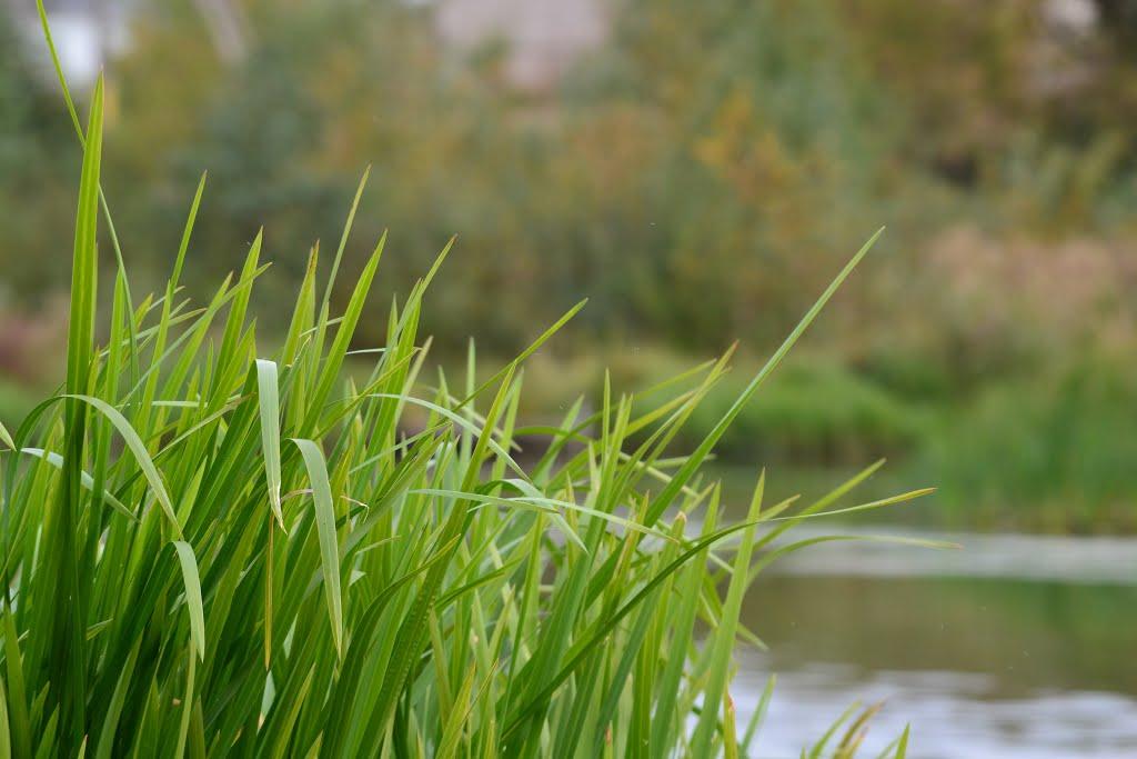 Трава у речки, Людиново