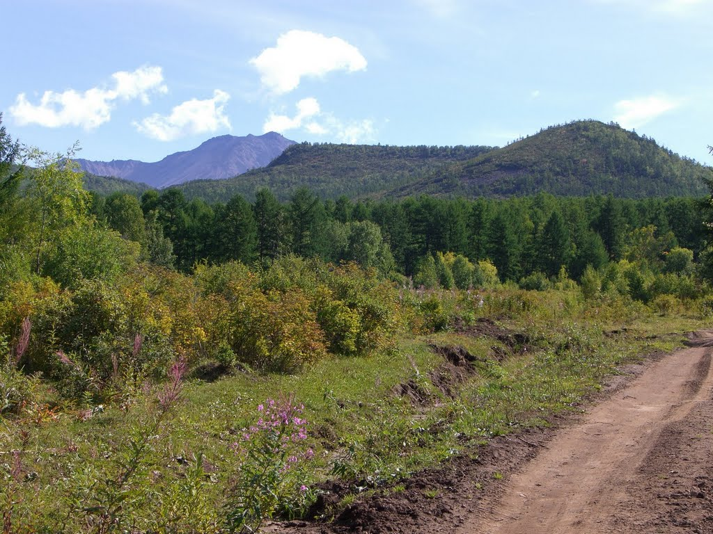 Kamchatka, Esso. Forests near Esso in the Natural Park Bystrinsky., Крапивная