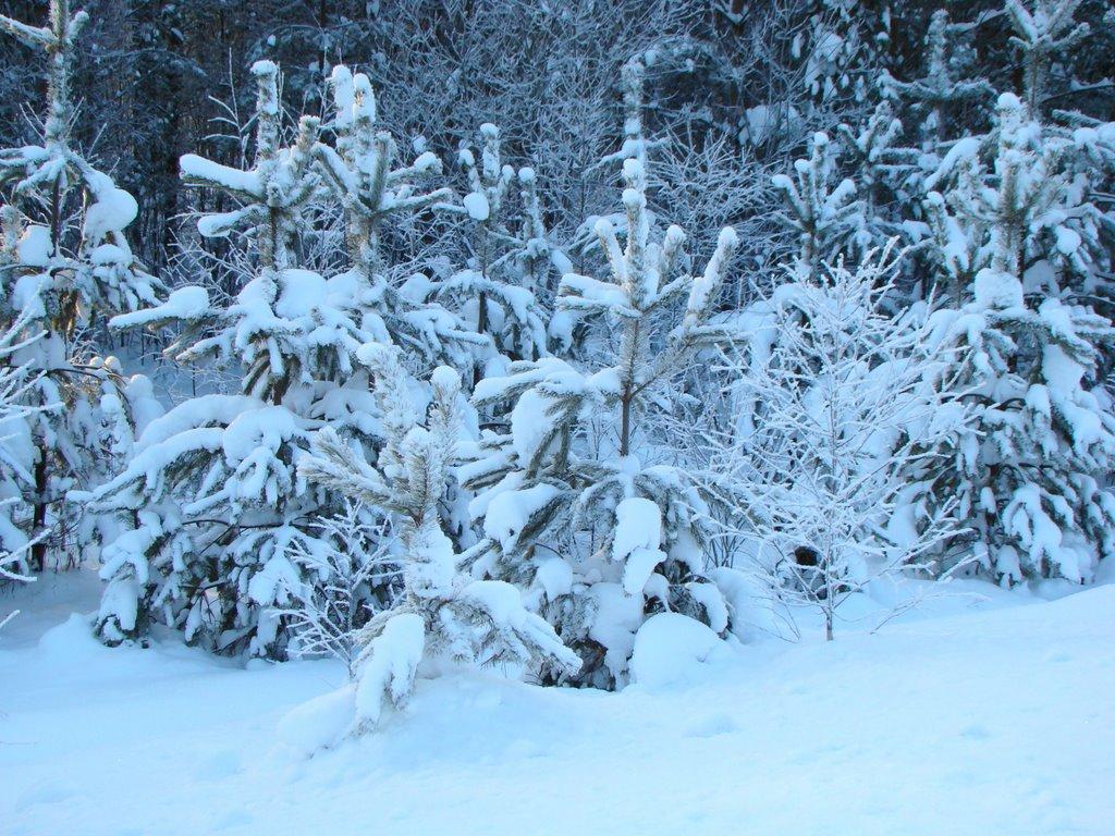 Снежные платья, Ижморский