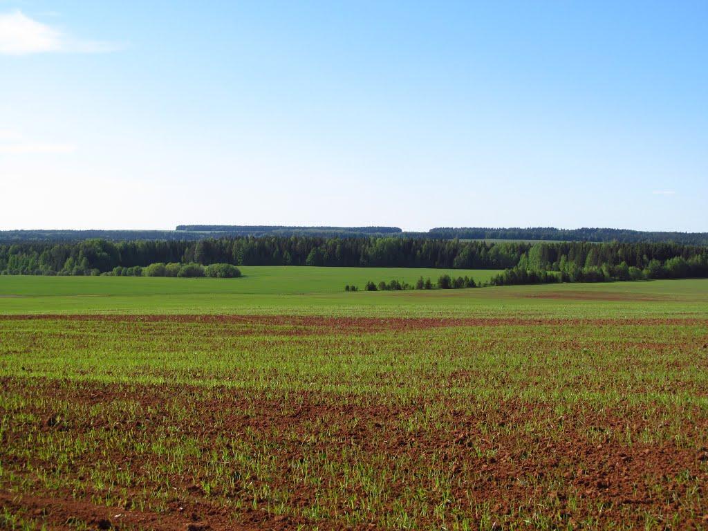 Вид в сторону д.Воробьи, Халтурин