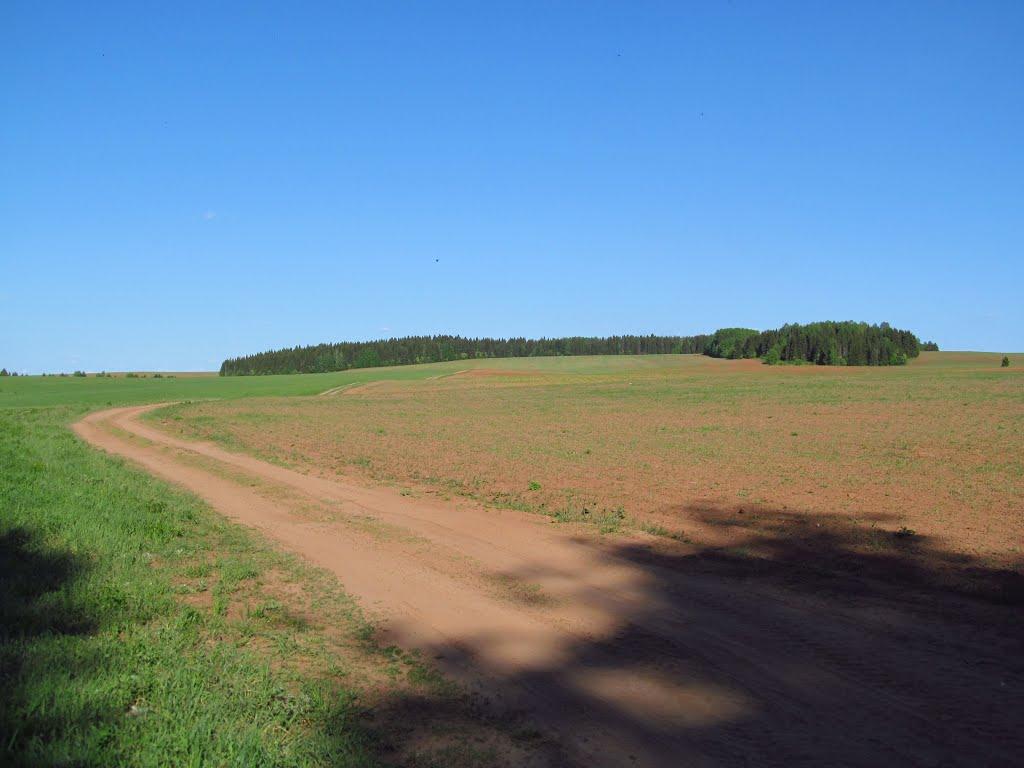 Вид от леса на Черепаший холм, Халтурин
