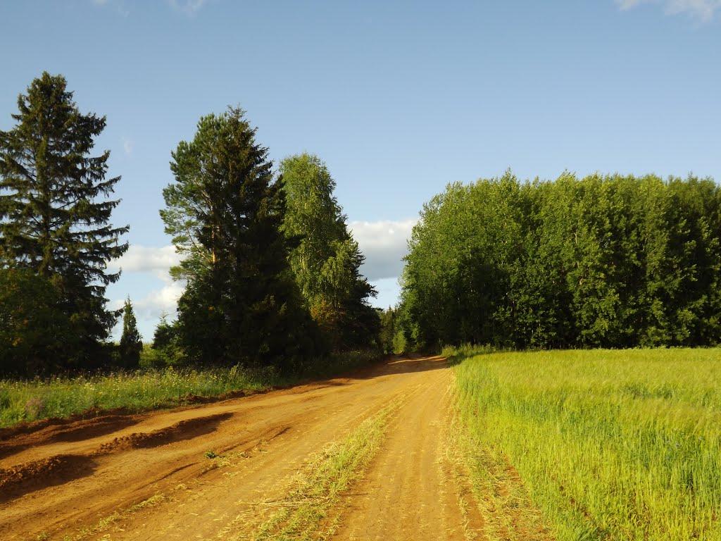 Лес на вершине холма, Халтурин