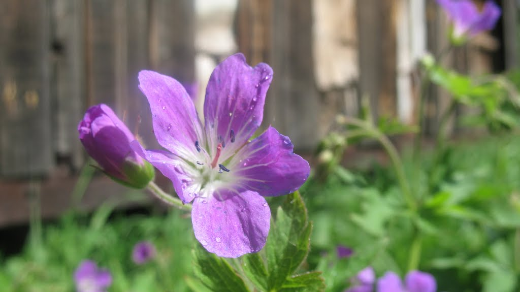 цветок, Кожым