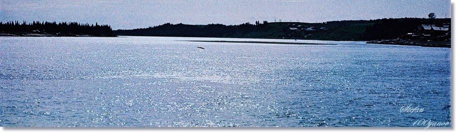River Mezen in Koslan - July 1981 / Река Мезен в Кослан - Юли 1981 г., Кослан