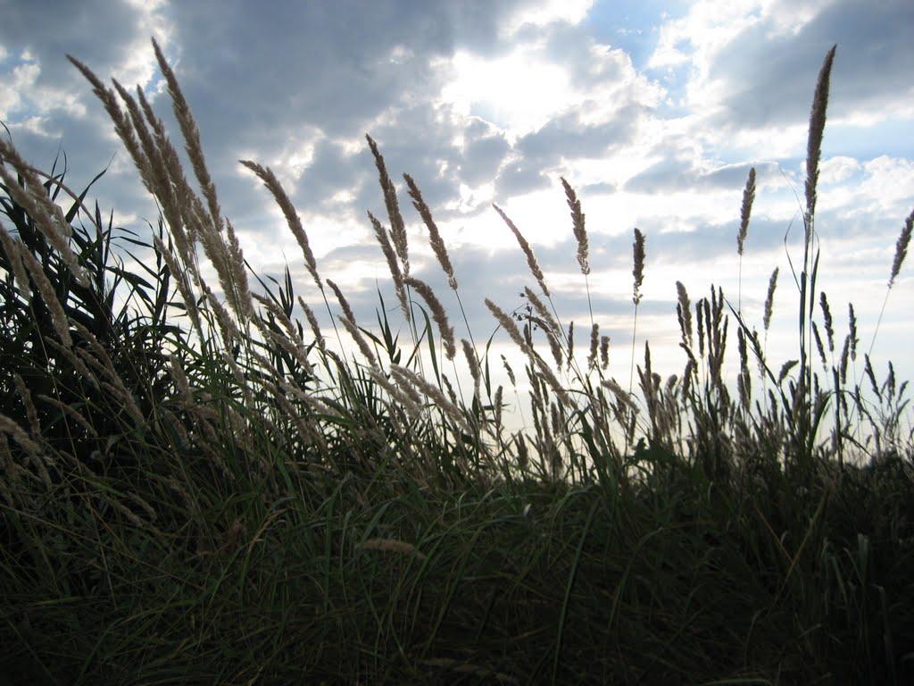 в поле, Гиагинская