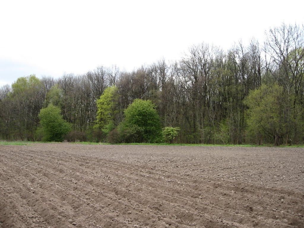 Конышевский лес весной, апрель 2007 года, Конышевка