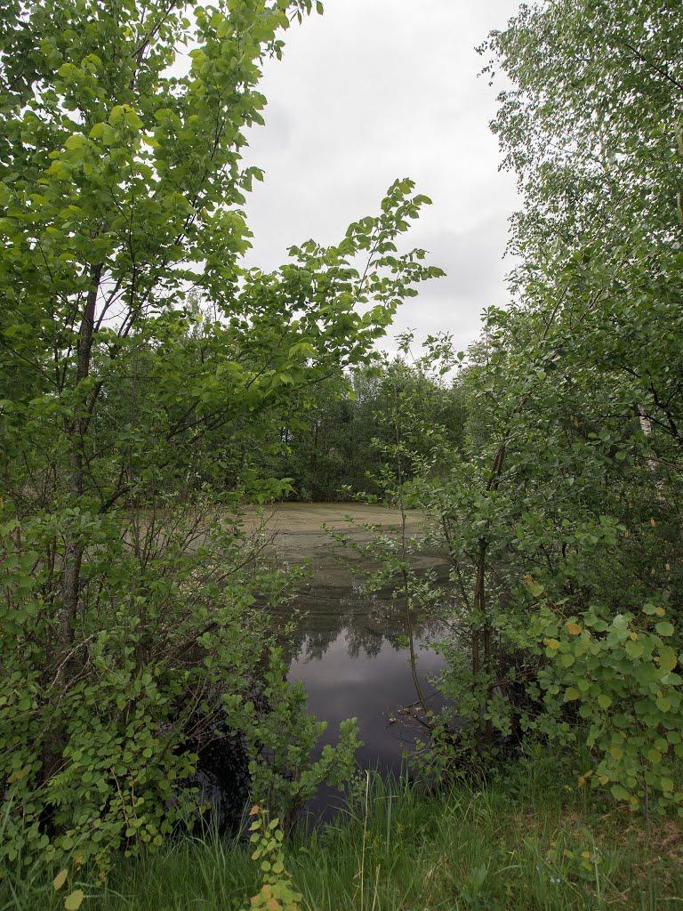 грязный пруд, Куровское