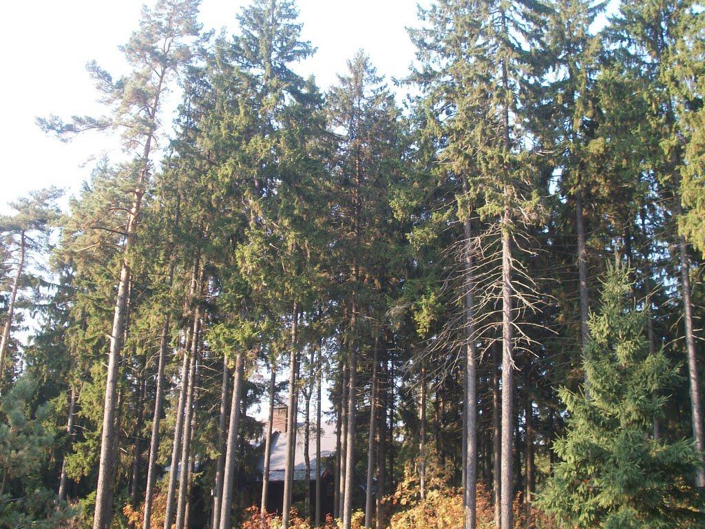 Trees, Лесной Городок