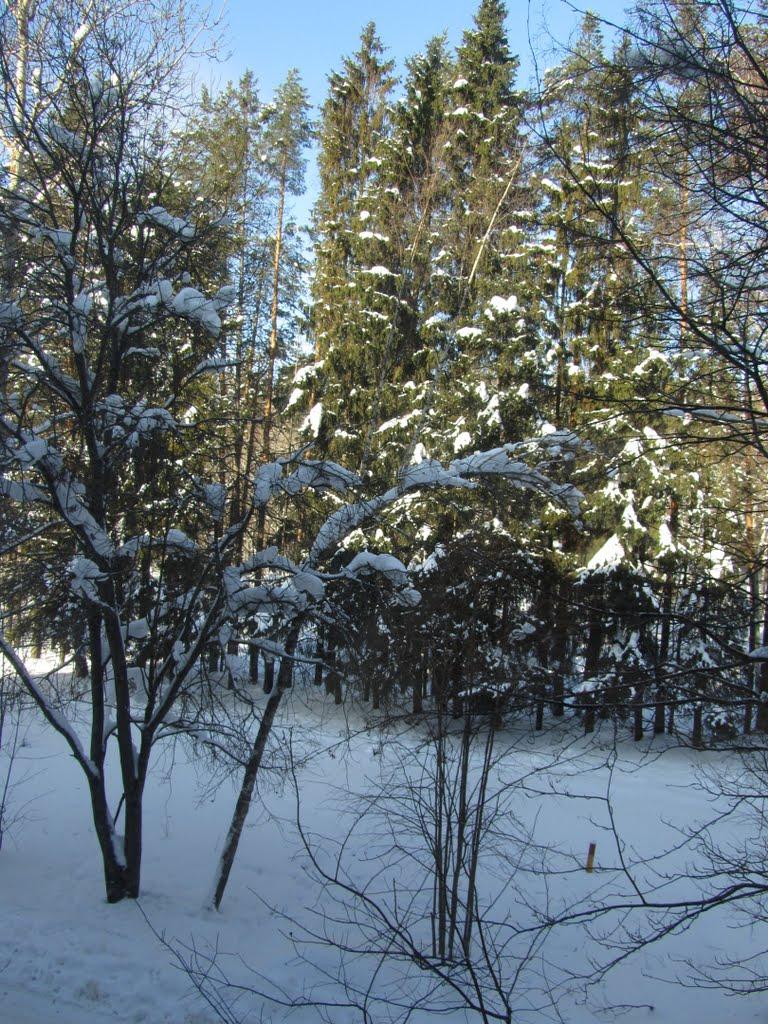 Деревья в снегу, Фряново