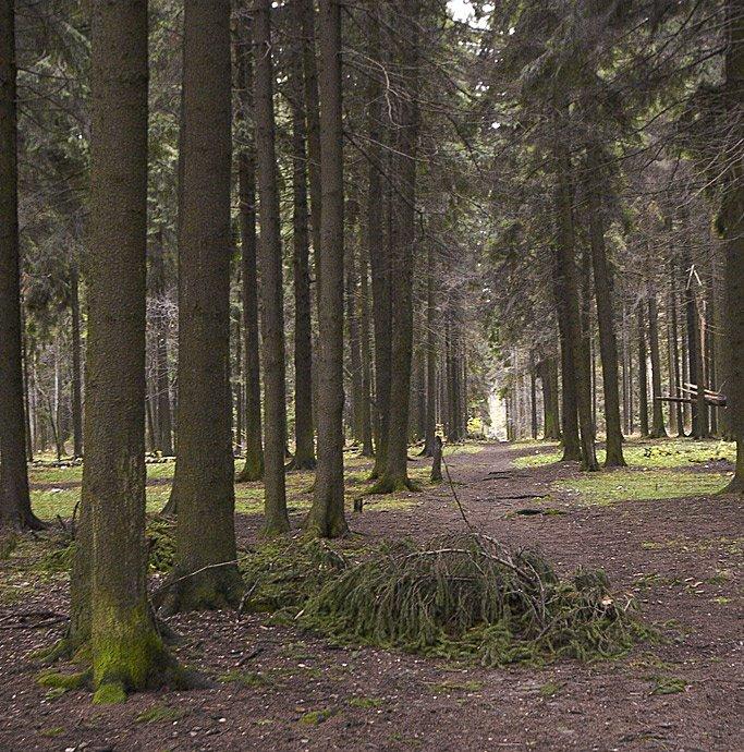 Челюскинский лес, Черкизово
