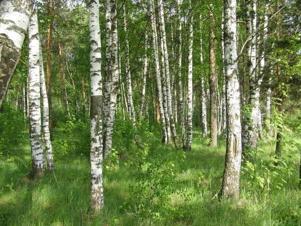 лес за Шатурторфом, Шатурторф