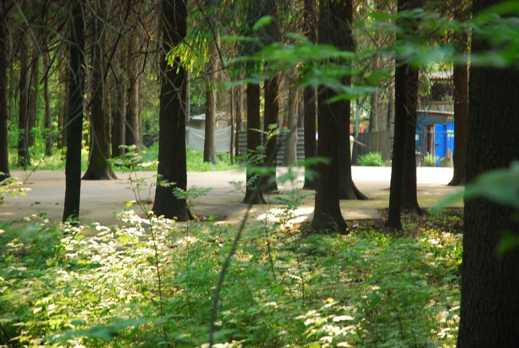 Деревья в асфальте, Шереметьевский
