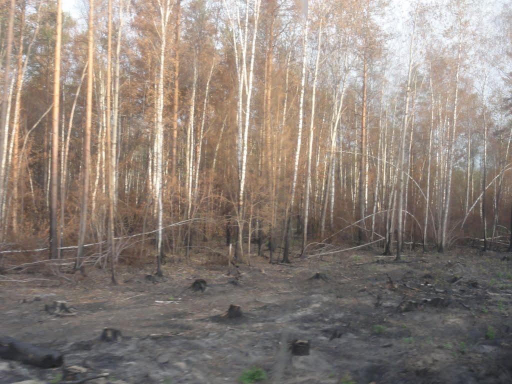 сгоревший лес 2010, Электрогорск