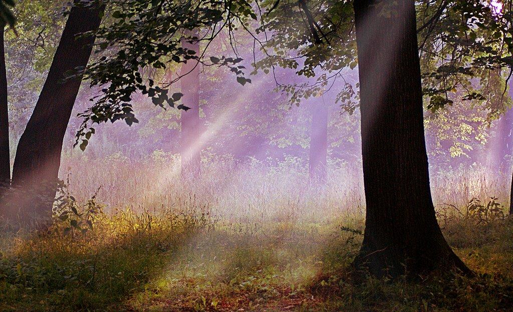 Таинственный лес, Электроугли