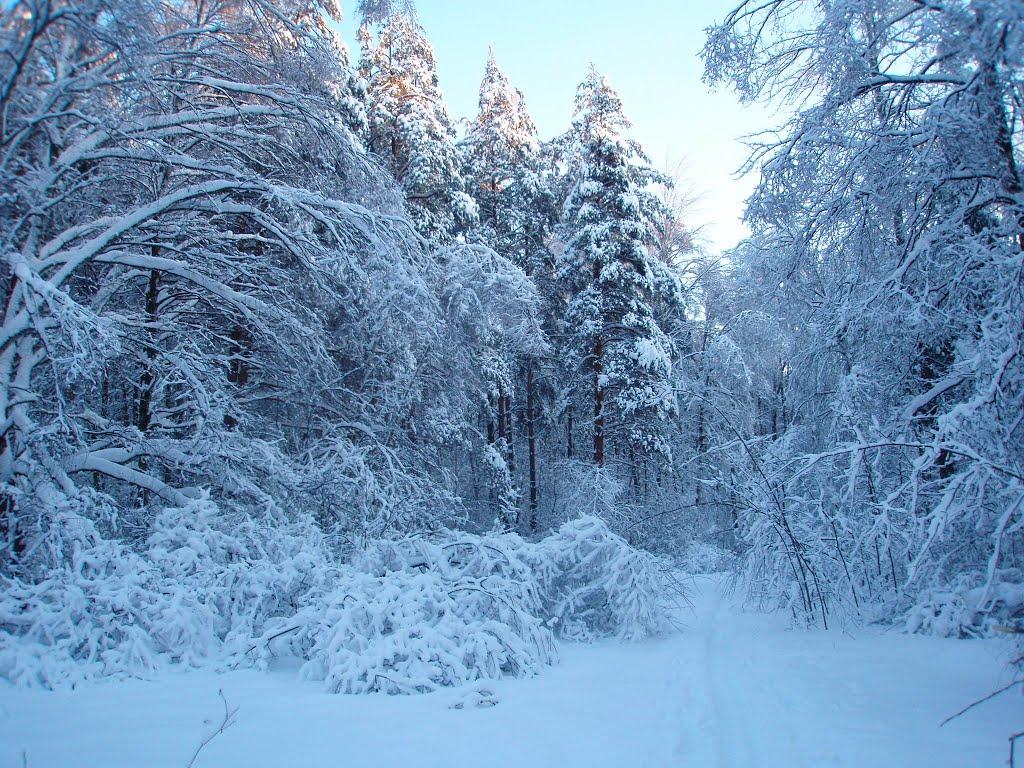 Зимний лес., Электроугли