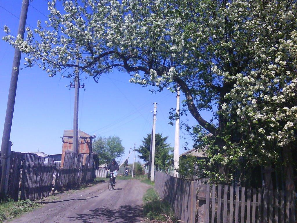 улица Партизанская, Муромцево