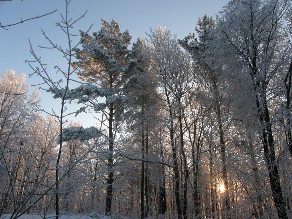зимний лес, Каменка