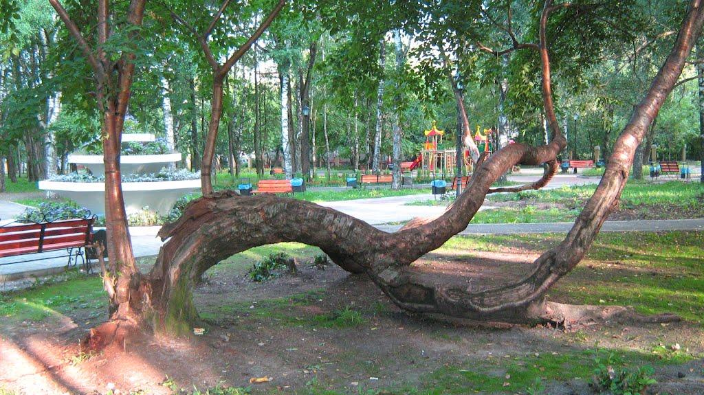 Парк в г. Березники, Березники