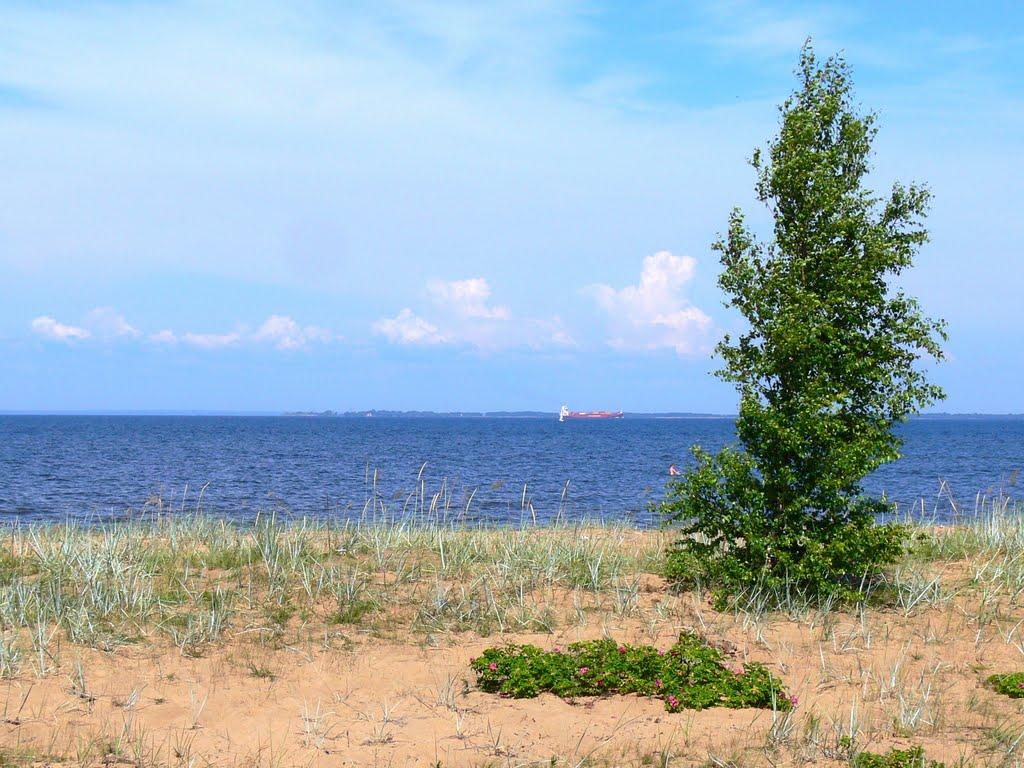 Залив в июле 2011, Большая Ижора