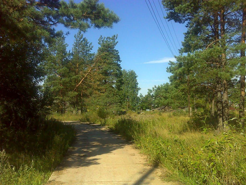 Сосновая дорога к озеру, Будогощь