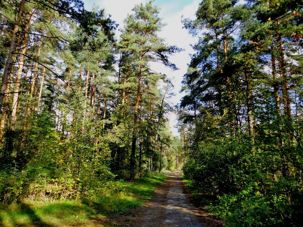 Wood track / Лесная тропа, Всеволожск