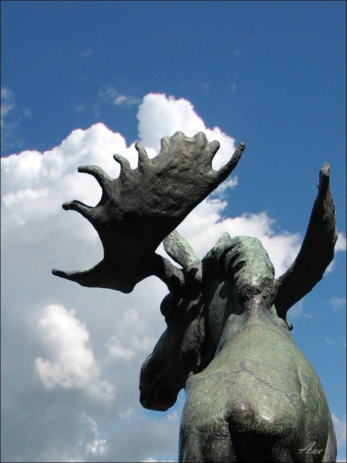 Vyborg. An elk - simply elk :), Выборг