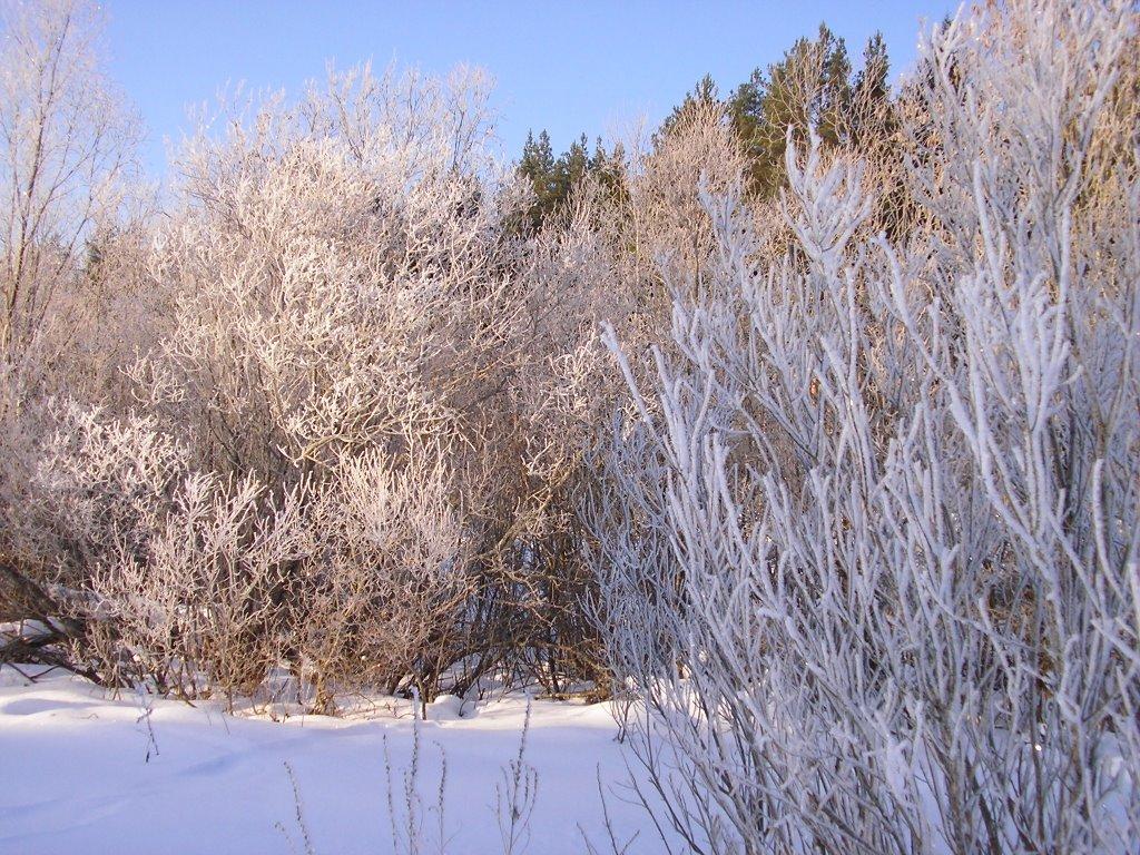 Winter, Вырица