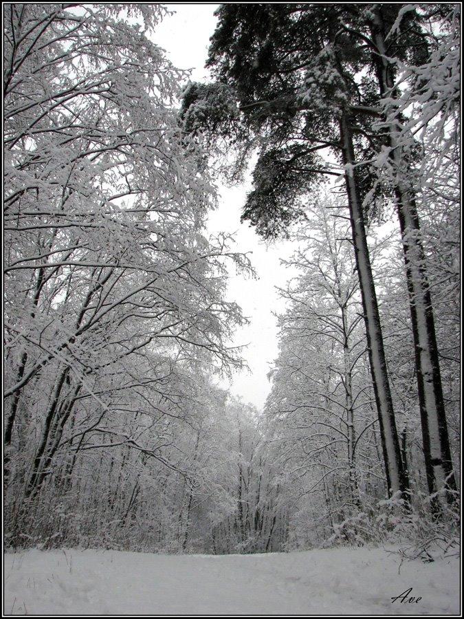 Gatchina. Prioratsky park., Гатчина