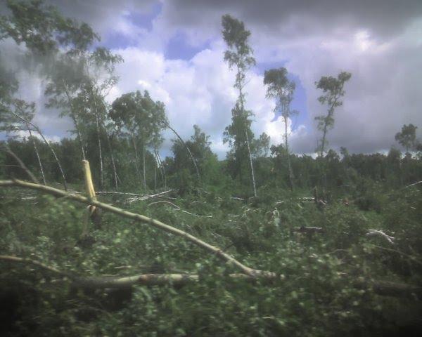 Ещё вчера здесь был лес..., Дубровка