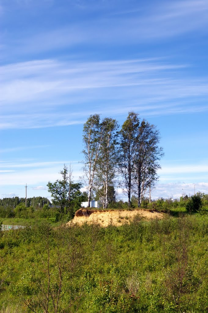 Birch cape, Парголово