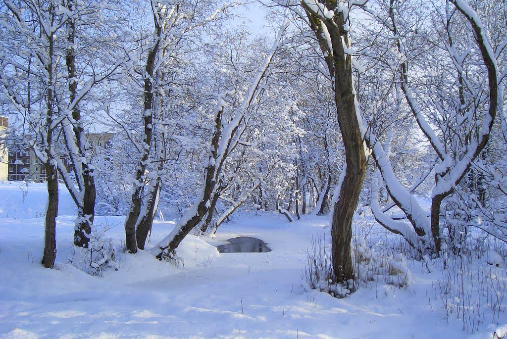 Река Кушелка под льдом, Сланцы
