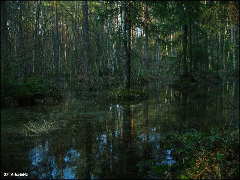 Sunken Forest, Сосновый Бор