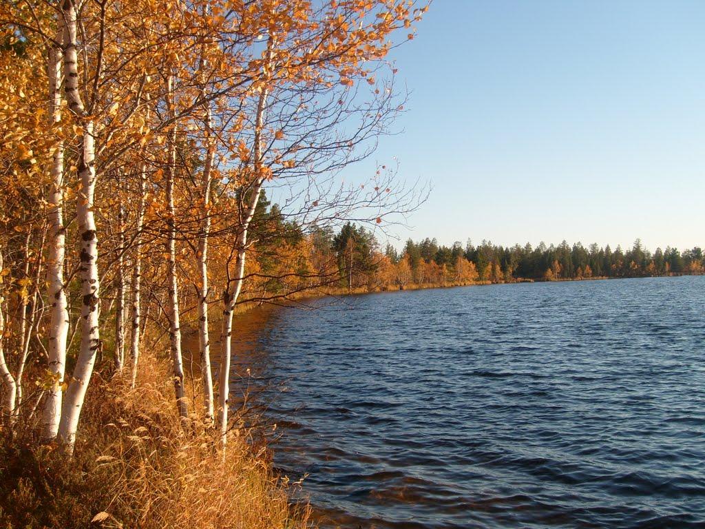 Autumn in Siberia, Муравленко