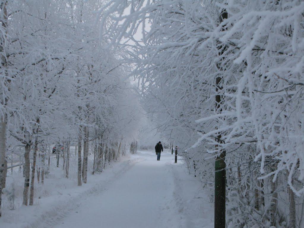 ► Зима,ул.60лет Победы.  *, Ноябрьск