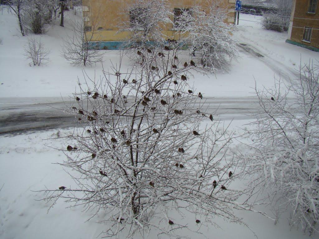 Птички, Лесной