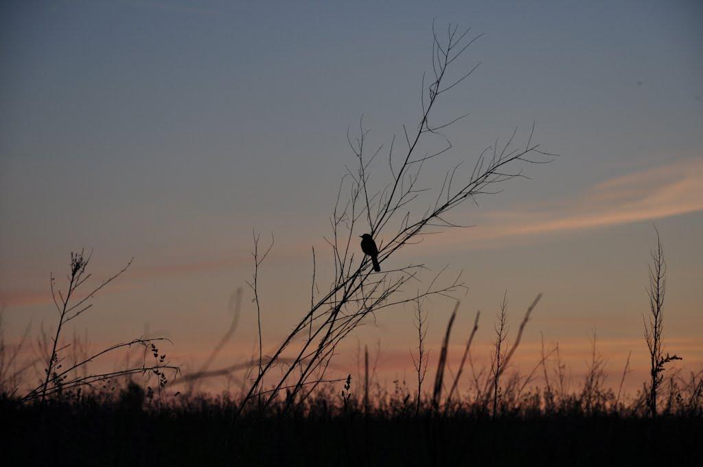 на закате, Десногорск