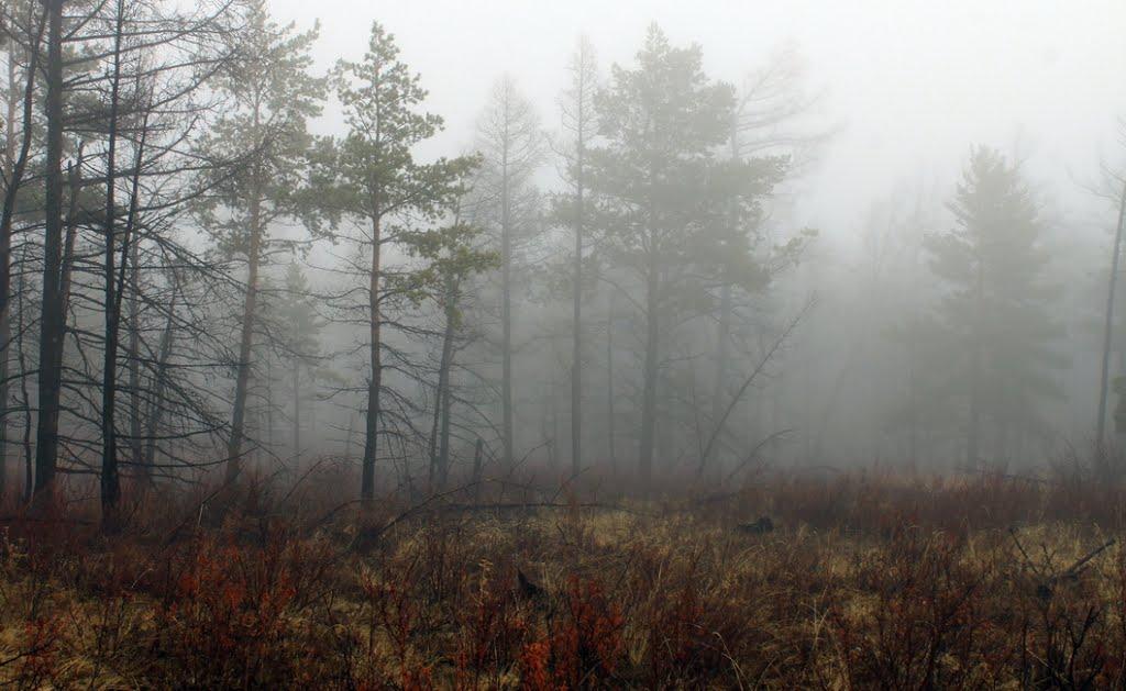 Туманный лес, Самагалтай