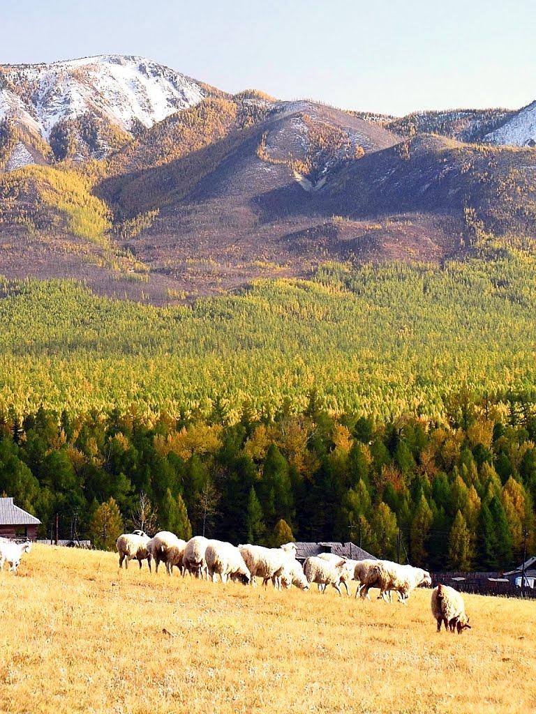Тывинские Альпы., Суть-Холь