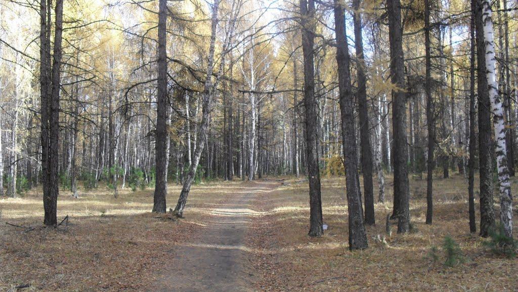 Через лес, Тоора-Хем