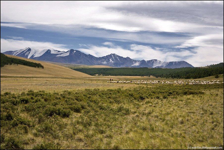 Долина р.Каргы, г.Монгун-Тайга, 3970 м, Тээли