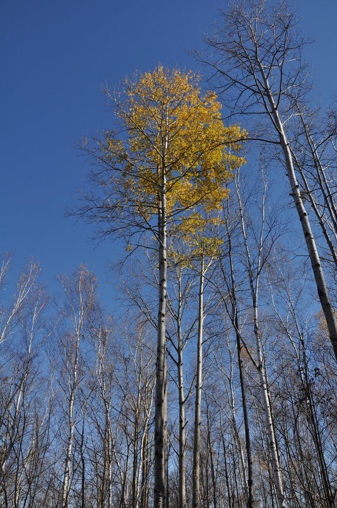 Obluchye (2012-10) - Forgotten leaves, Облучье