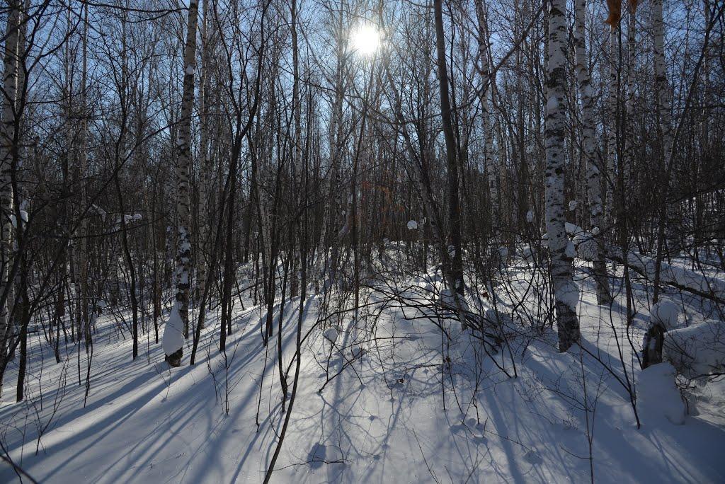Obluchye (2013-02) - Forest in winter time, Облучье