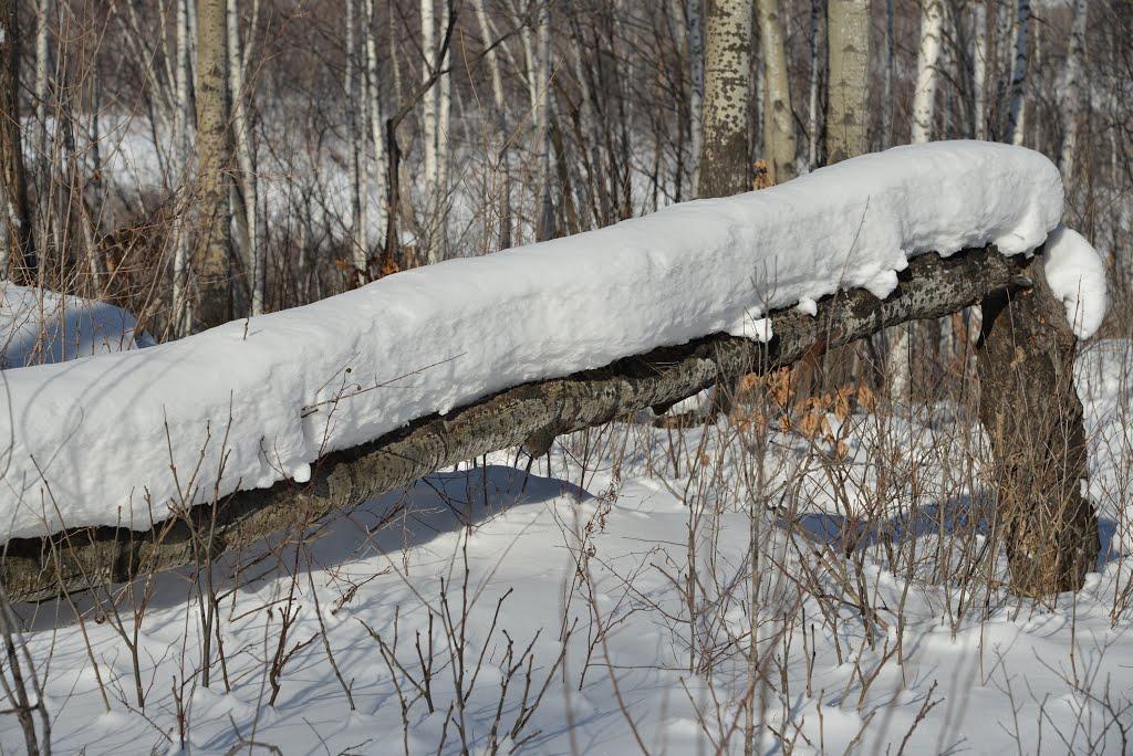 Obluchye (2013-02) - Tree log covered with snow, Облучье