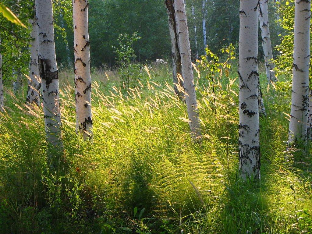 На тропе здоровья 12.08.2005, Снежинск