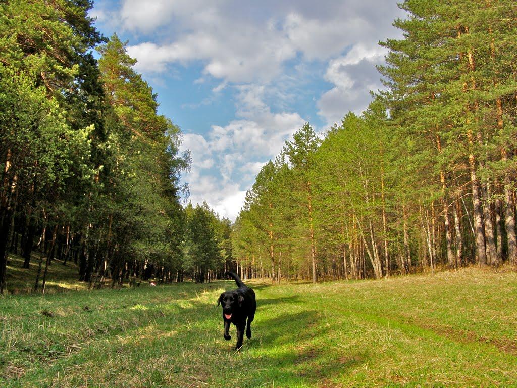 в лесу на БАМе, Трехгорный