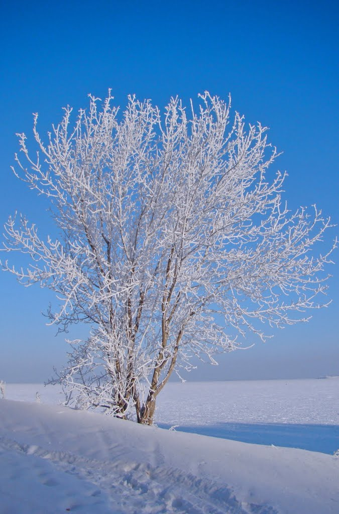lonely tree in the snowy wilderness, Озерск