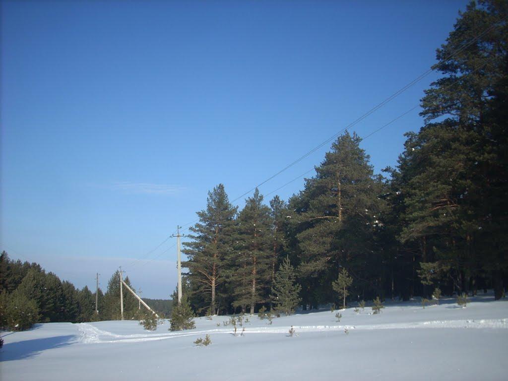 Опушка леса - дорога на горбольницу, Куса