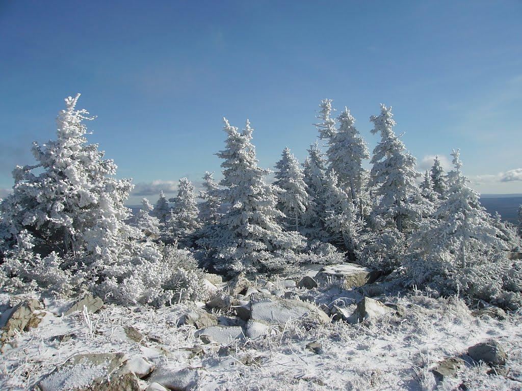 ёлки запорошенные снегом, Сатка