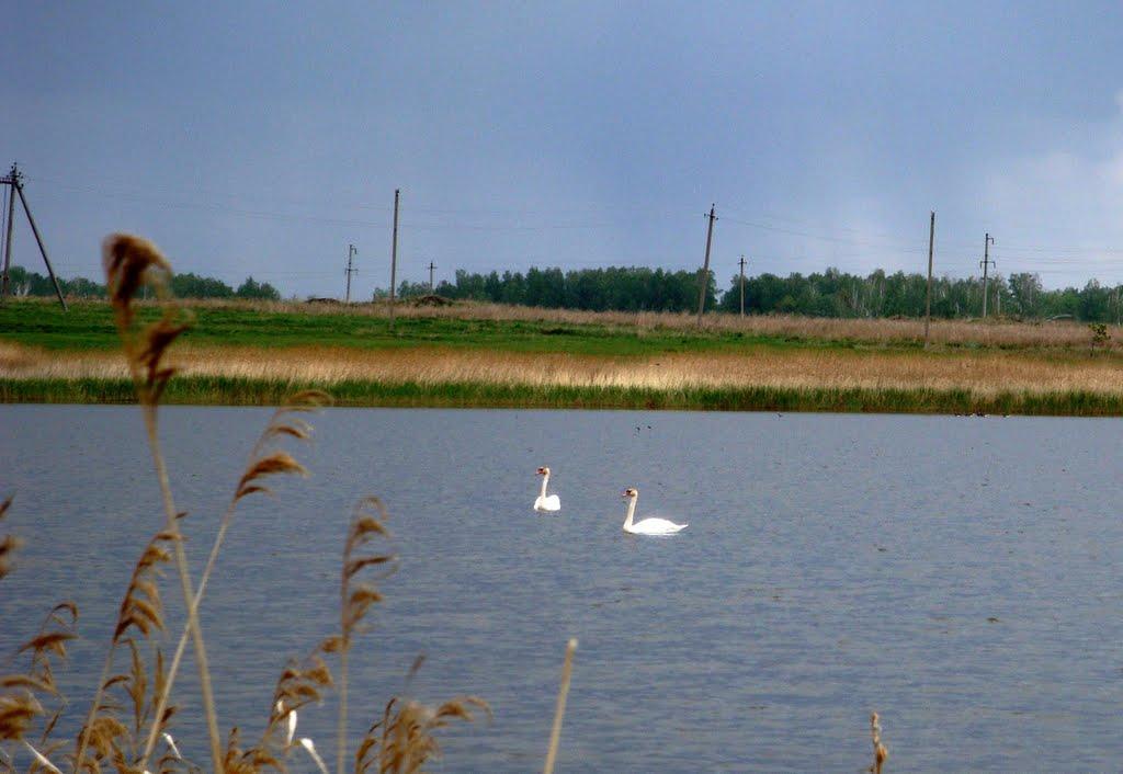 Лебединое озеро, Увельский